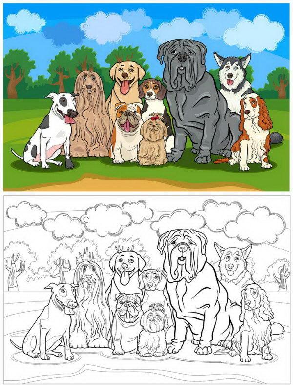 צביעה של כלבים גזעיים בשדה